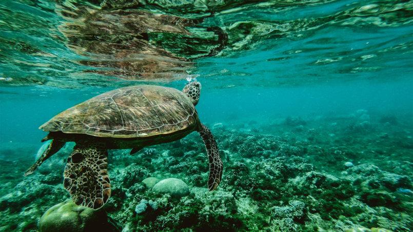 Африканские черепахи
